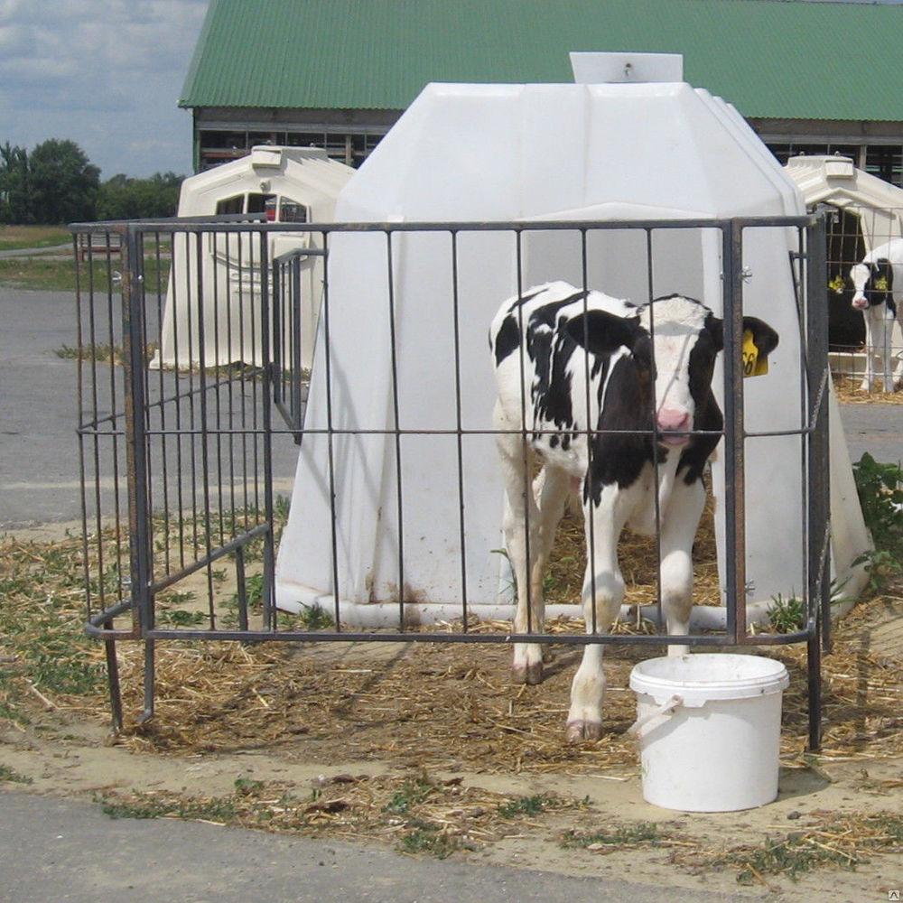 Домик для телят, теленок в домике
