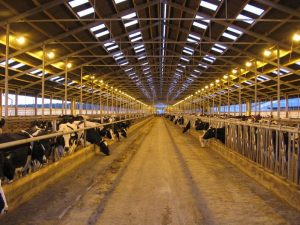 Освещение на ферме, свет для коров,