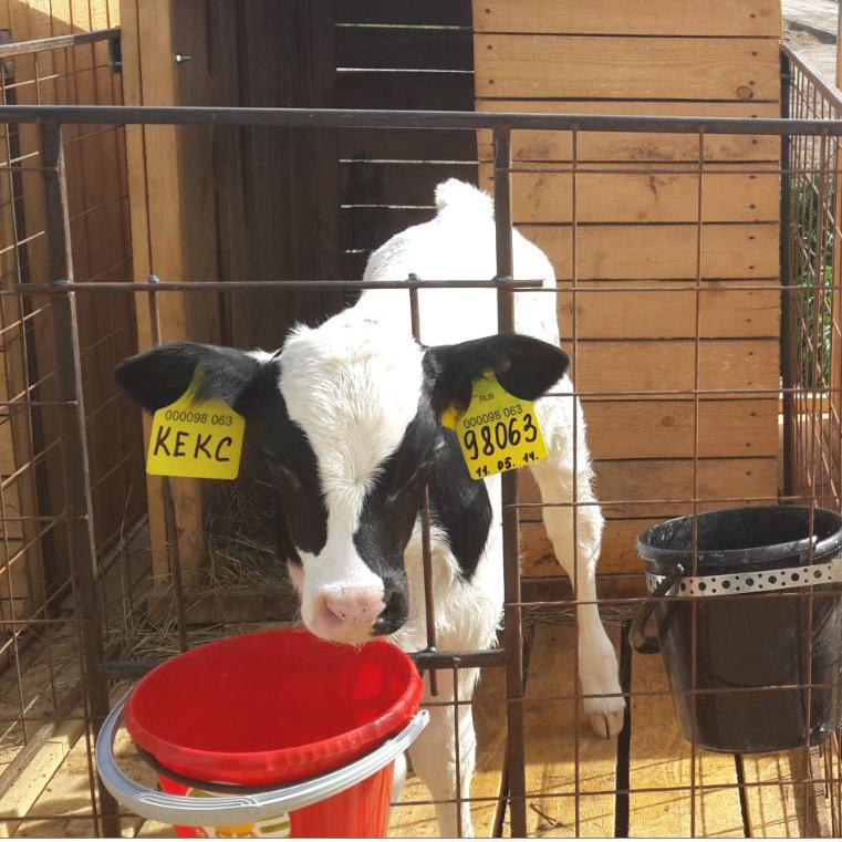 Домики для телят, загоны для телят, поилки для телят, молочное такси, клетки