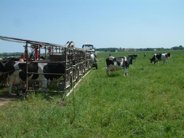 Летний лагерь для коров, летнее стадо, пастбище